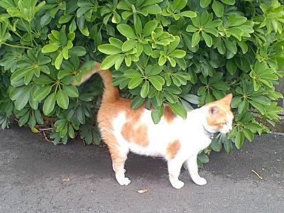 にゃらんそっくり猫