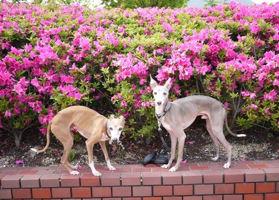 広~い芝生広場がいくつもあるのに、犬は立ち入り禁止なんだってー。ちぇーっ。