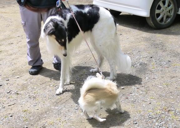 ジェリーちゃんはほとんど飼い主さんの傍から離れず。