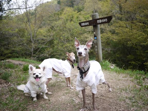 先日の山散歩と違って、看板が多いので迷う心配はありません・笑