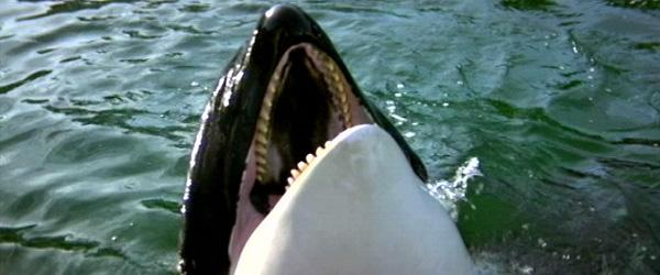 orca5.jpg