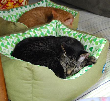 ジャンジャンとメンメ 寝てる