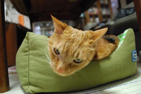 猫ベッドでメンメ
