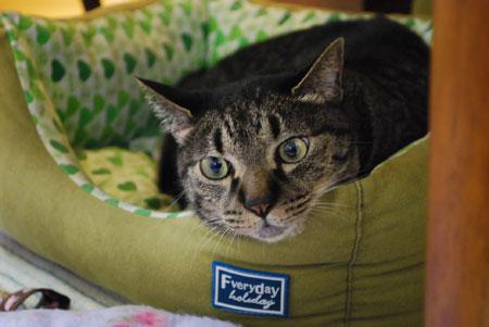 ジャンジャン 猫ベッドで