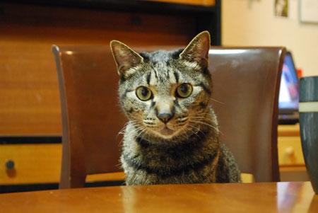 ジャンジャン、テーブルの前で