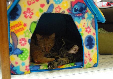 猫ハウスの中で寝る