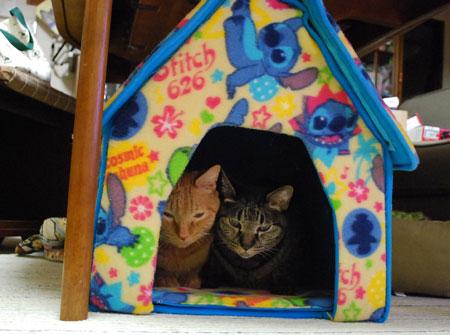 猫ハウスの中で