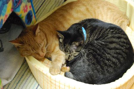 ジャンジャンとメンメの猫団子