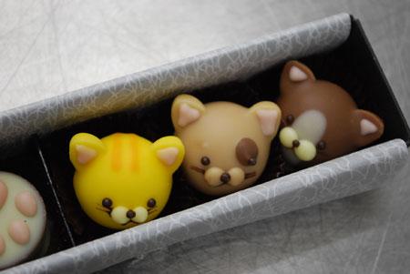 アニマルチョコレート ハチワレ