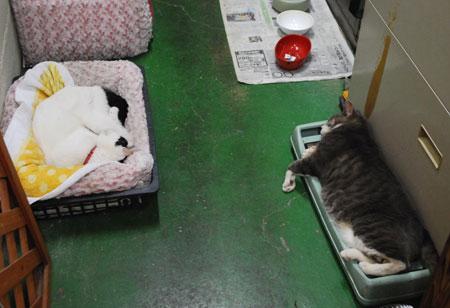 チロちゃんとエマちゃん寝落ち