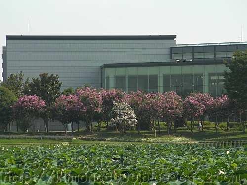 百日紅と長居公園の花と緑と自然の情報センター