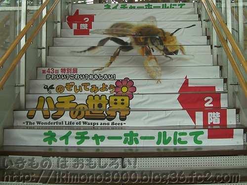 特別展恒例の階段看板その2「のぞいてみようハチの世界〈自然史博物館〉」