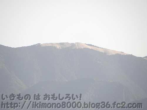 錦織公園展望台から見た冬の岩湧山山頂(2011年4月)