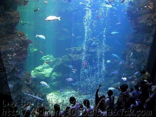 クエやナポレオンフィッシュもいる京都水族館の大水槽