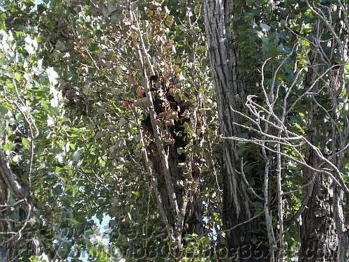 青枯れした枝葉に隠れた黒っぽいもの