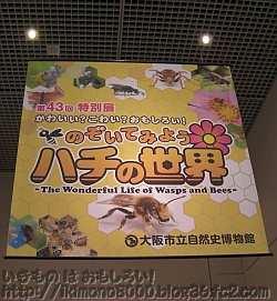 館企画の特別展恒例入り口垂幕「のぞいてみようハチの世界〈自然史博物館〉」