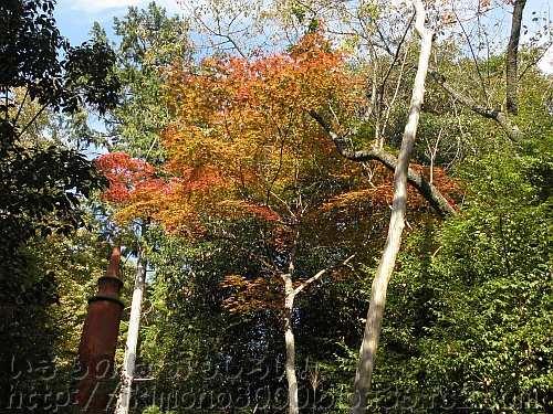 緑の中の鴬の滝近くの紅葉