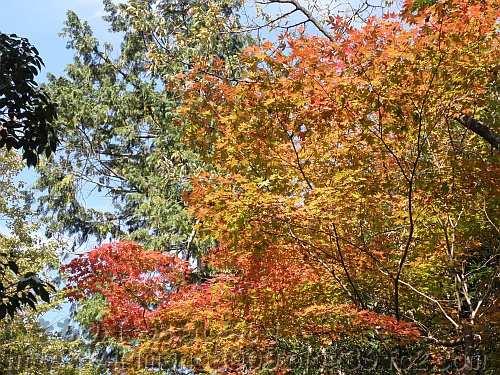 他の場所よりちょっと早い鴬の滝近くの紅葉