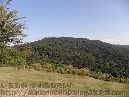 若草山山頂付近から見た晩秋の天然記念物春日山原始林