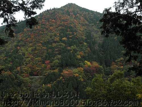 復元不動坂から見た高野山の向かいにある紅葉谷