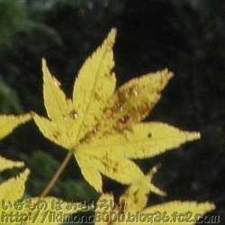 弁天岳の大門側の紅葉