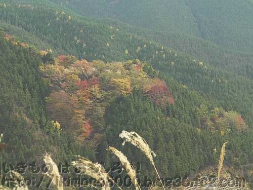女人道南ピークから見える山々の紅葉