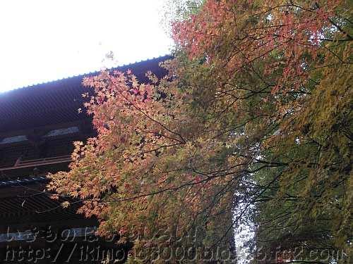 大門と紅葉