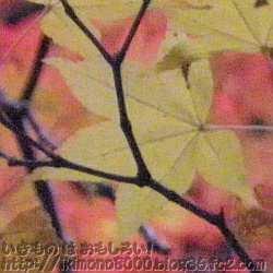 水向地蔵の紅葉