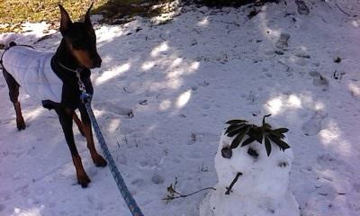 だるまドルと雪