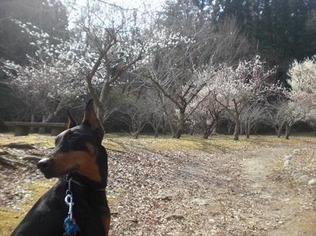 茂原公園花咲いてない