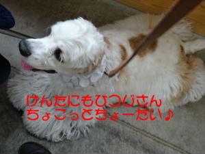 DSC00176_convert_20120512190146_copy.jpg