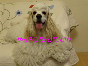 DSC00326_convert_20120520195916_copy.jpg
