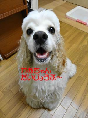 DSC00552_convert_20120915102829_copy.jpg