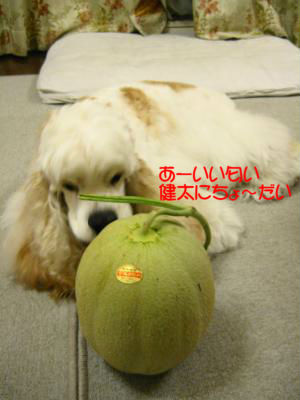 IMG_2191_convert_20120707221352_copy.jpg