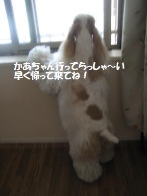 IMG_2214_convert_20120728113237.jpg