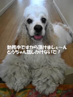IMG_2230_convert_20120728105826_20120728115655.jpg