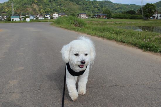 吠えない犬1