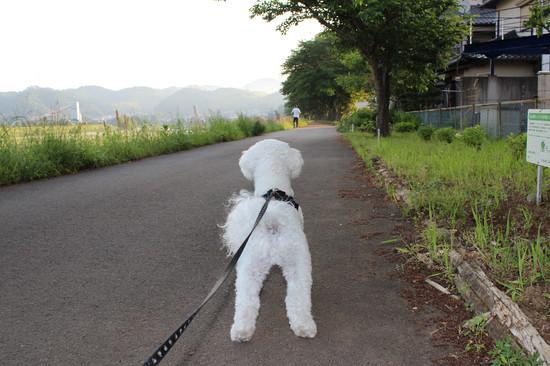 吠えない犬3