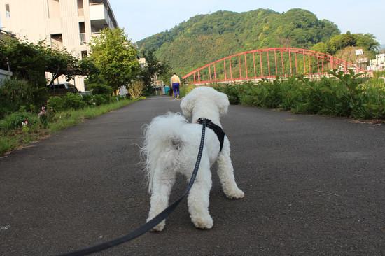 吠えない犬5