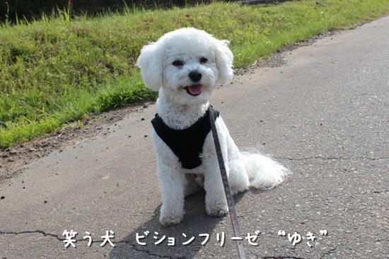 吠えない犬7