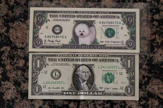 Bichon Dollar 2