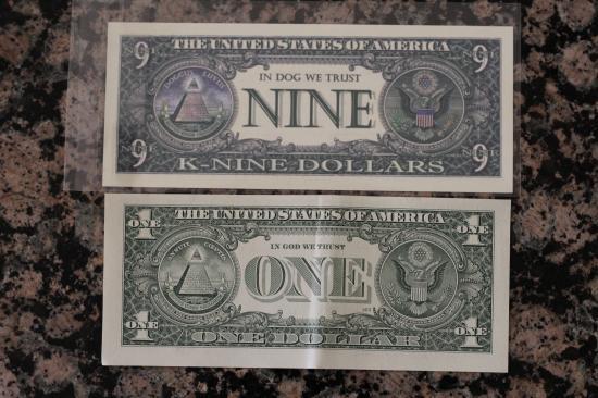 Bichon Dollar 3