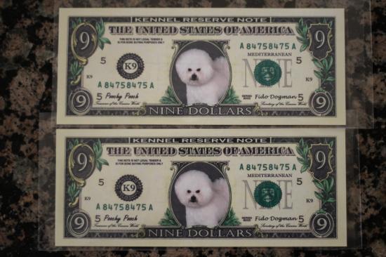 Bichon Dollar 4