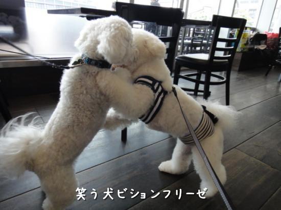 いちぼ君 vs ゆき