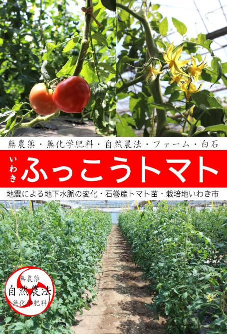 120703ふっこうトマト[1]