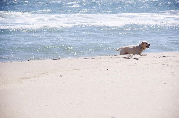 砂浜綺麗だったね~♪