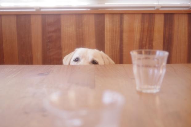 テーブルの上をのぞきたいらしい。