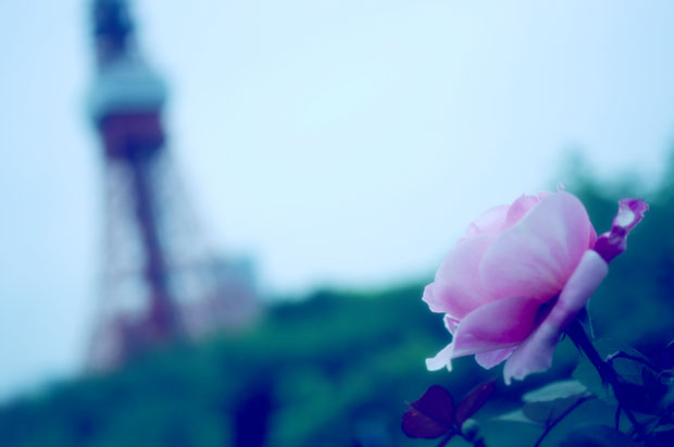 東京タワーとバラが撮りたかったんだよぉぉぉ。
