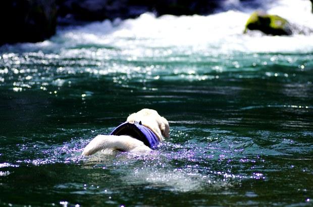 ちょーご機嫌で泳いでおりまする♪