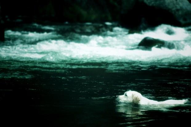 泳ぐ~泳ぐ~へたくそな犬かきで~♪